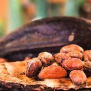 Kakaos Raises