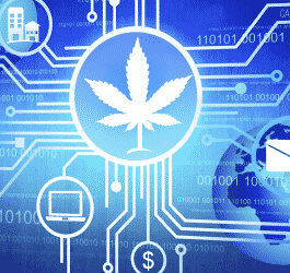 Blockchain Company Trace gets Patent for the CBD Supply Chain Software